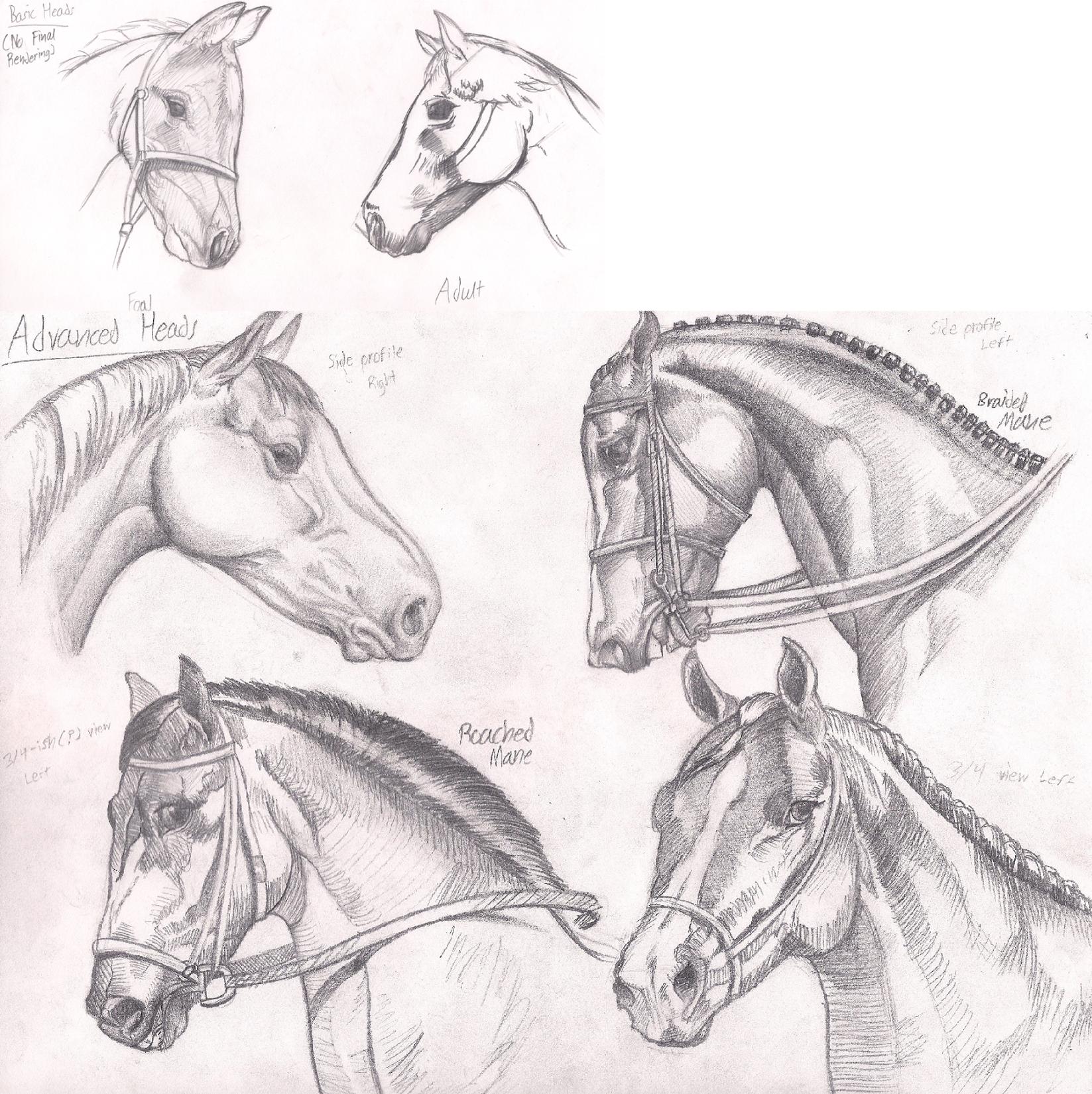 Horse Practice #4 (Heads) by Graboiidz