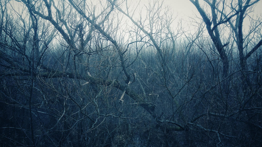Creepy Woods by cojocea2010