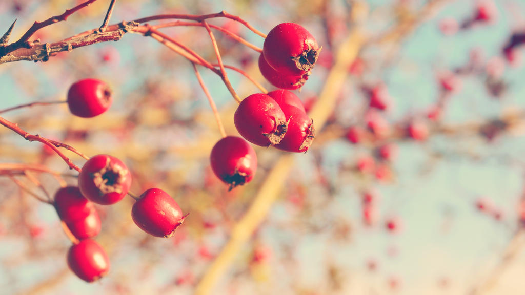 Very berry Wallpaper by Lodchen-Photography