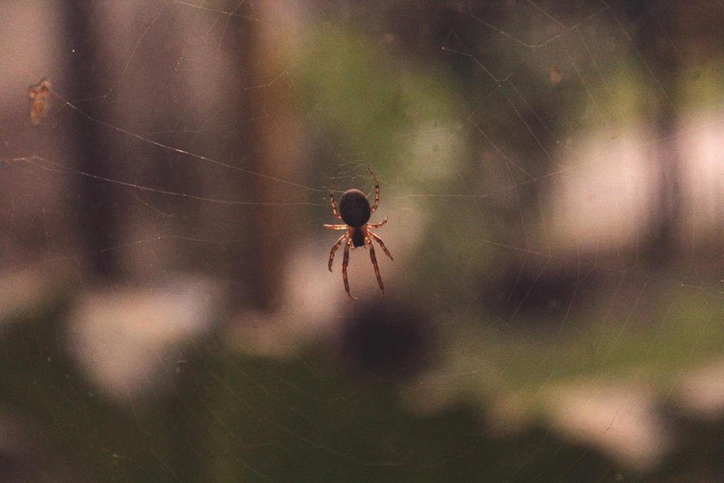 Spider by sandrukiwi
