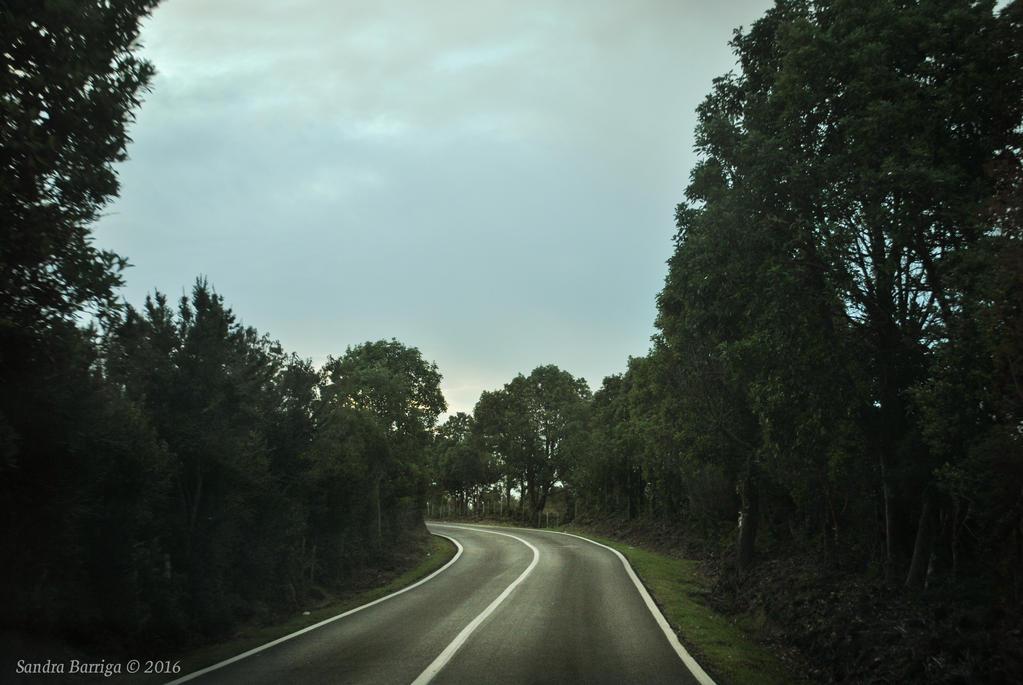 Por el Camino
