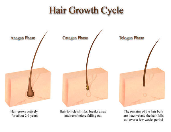 Hair Growth Diagram By Polariscaprica On Deviantart