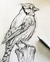 Sketch #53
