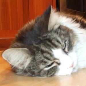 studiomusou's Profile Picture