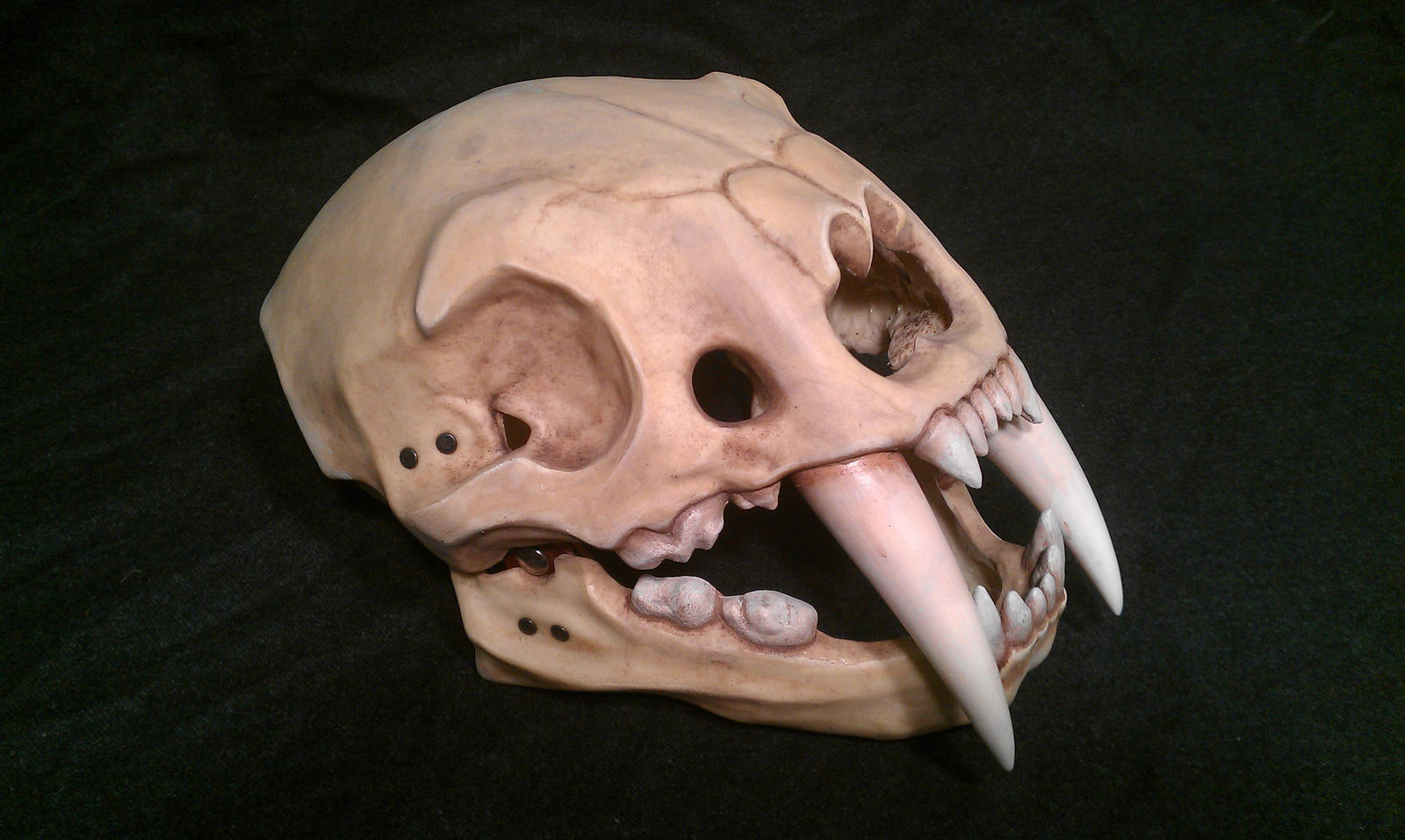 Sabre tooth tiger skull helmet by DragonArmoury