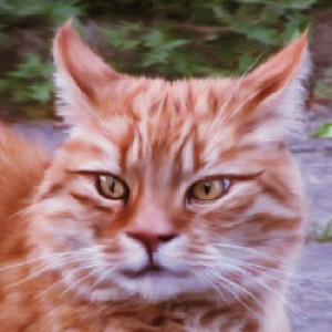 mrscats's Profile Picture