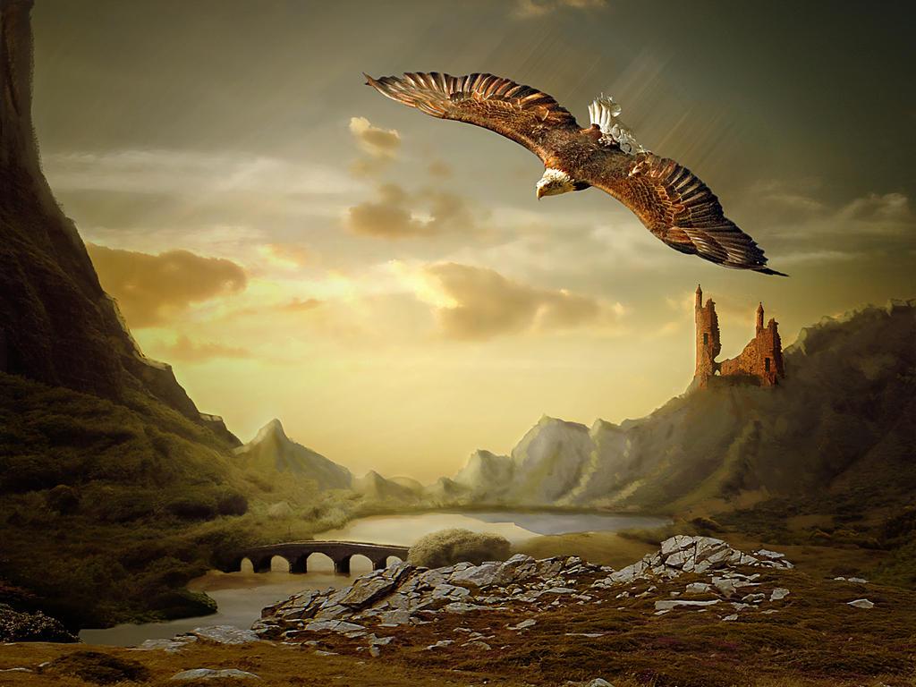 Free like an eagle ..... by mrscats