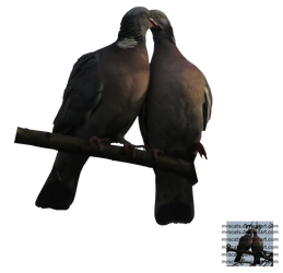 pigeon cut-out