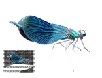 Dragonfly 1 - png