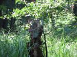 Tree Stump 3