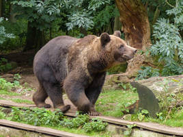 Bear 2 by mrscats