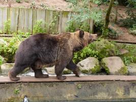Bear 5 by mrscats