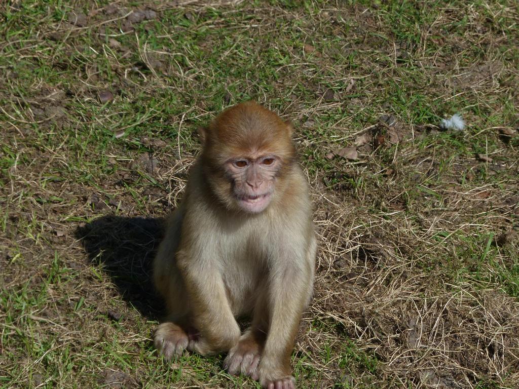 Monkey 2 by mrscats