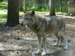 Wolfes 1