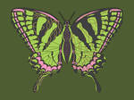 Celtic Swallowtail by vhartley