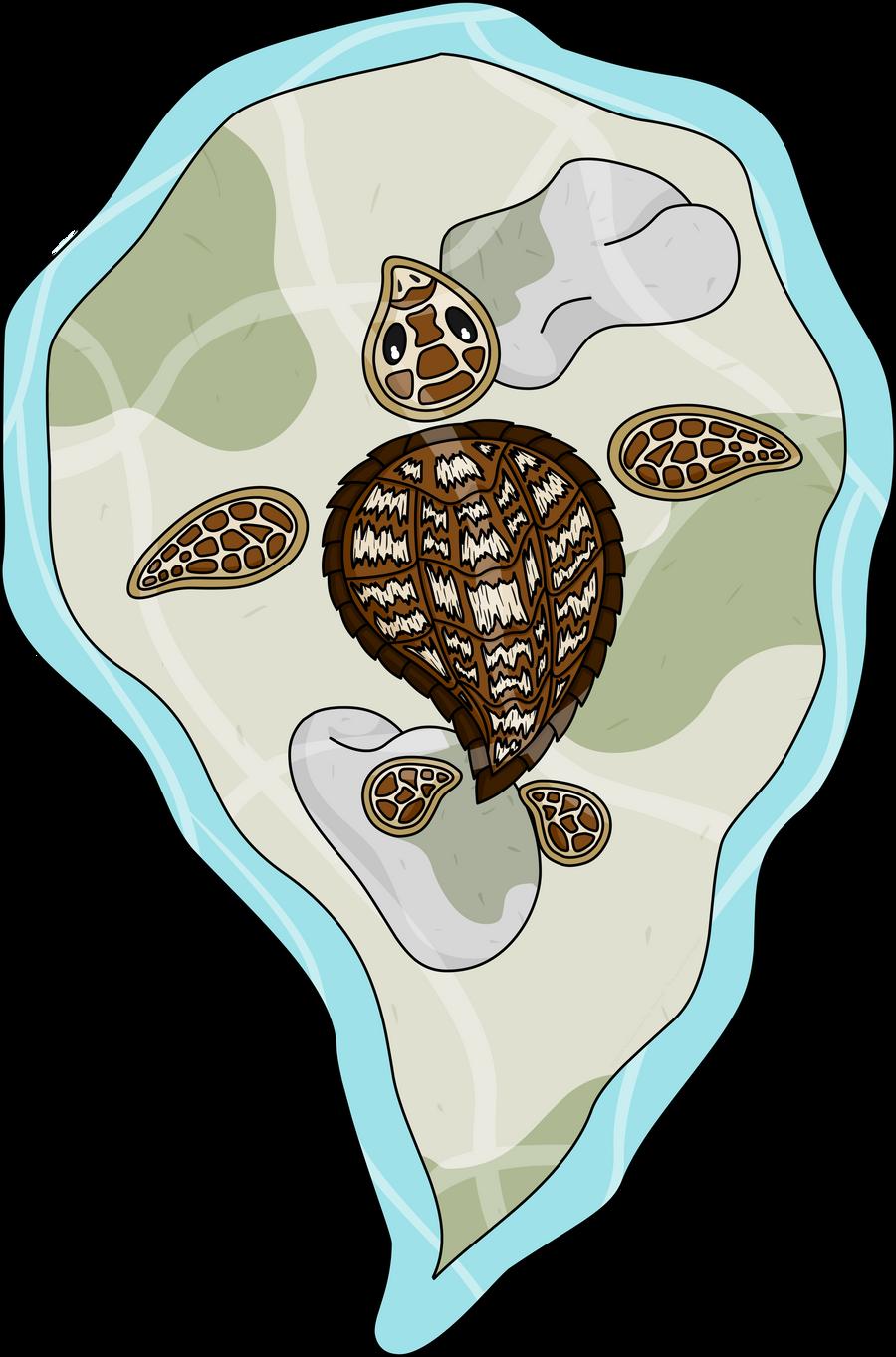 Callie the Sea Turtle