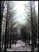 road less travelled by darkninja