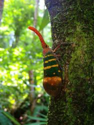 Lantern bug by Wunderling