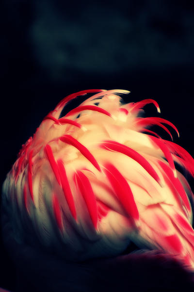 flamingo feathers by Wunderling