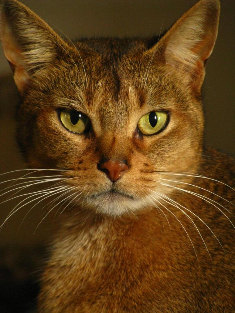 Neko Portrait by the-cat-whisperer