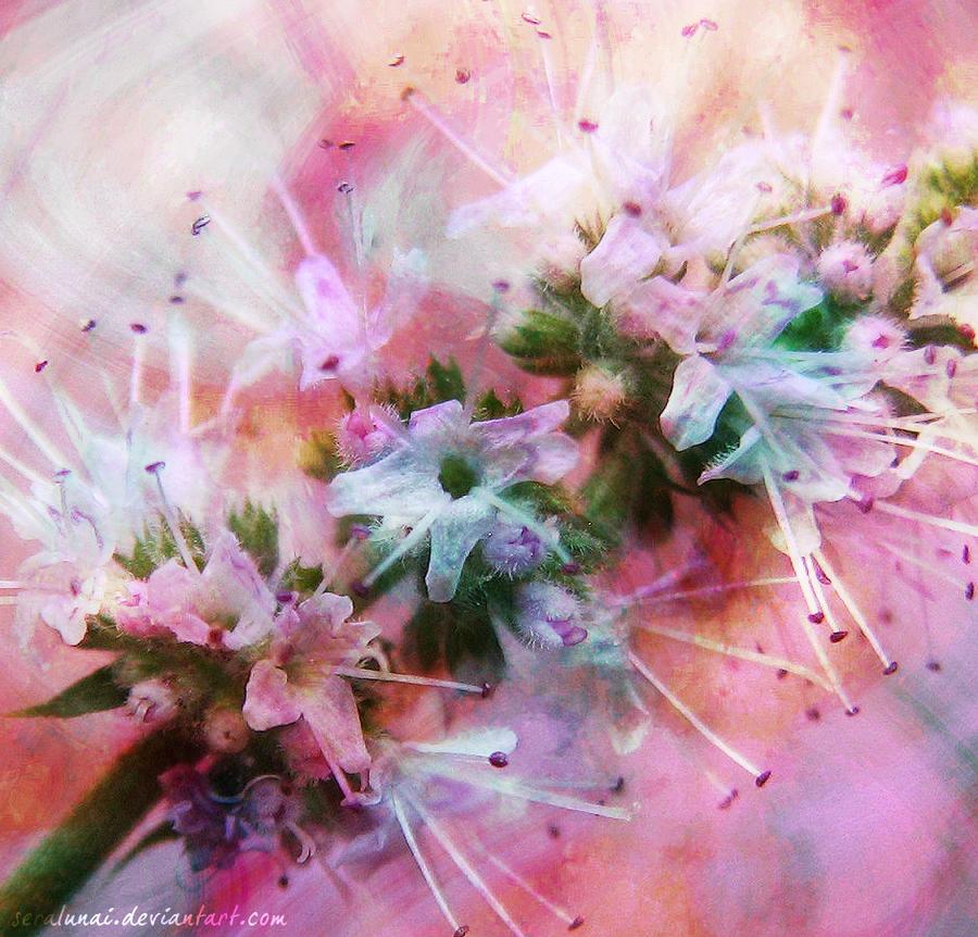 Tiny Pink by Seralunai