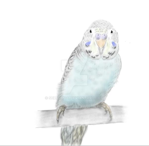 Blue Budgerigar by Seralunai