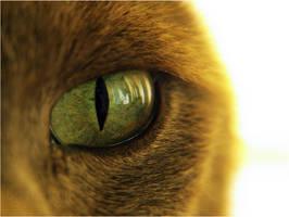 eye by mintyy