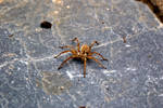 Spider Mastermind - Doom Rolzz