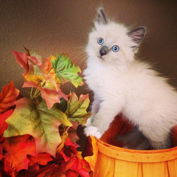 Fall Photoshoot by ScarletRainXlll