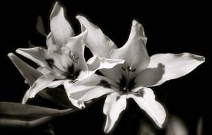 Black And White by MissSpocks