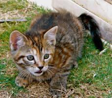 Meow by MissSpocks