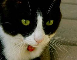 In My Cat's Eyes by MissSpocks