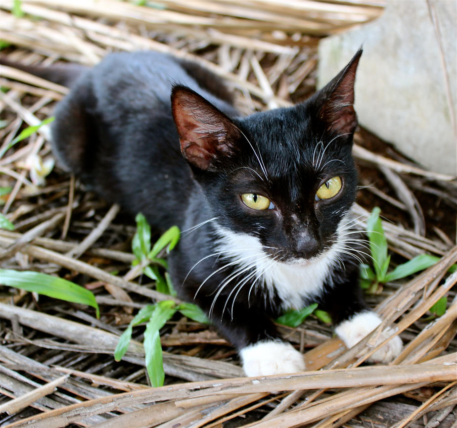 Lifou Kitty by MissSpocks