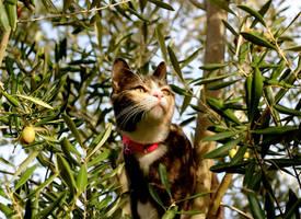 Kitten On A Mission by MissSpocks