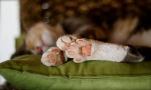 Little Pink Teddy Bear Paws by MissSpocks