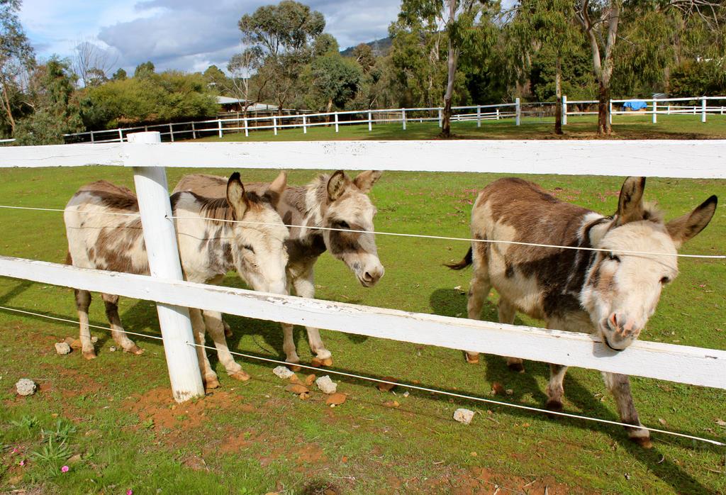 Three Little Donkeys by MissSpocks