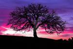 Oak Tree Sunset