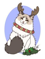 Christmas Cat - Fluffy