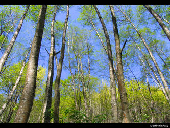 Trees by MikeKlacy