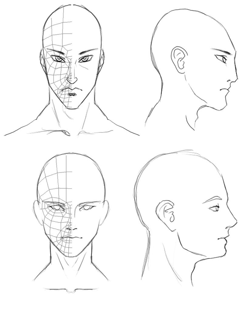 Line Art Ks2 : Orthographic head drawings by athey on deviantart