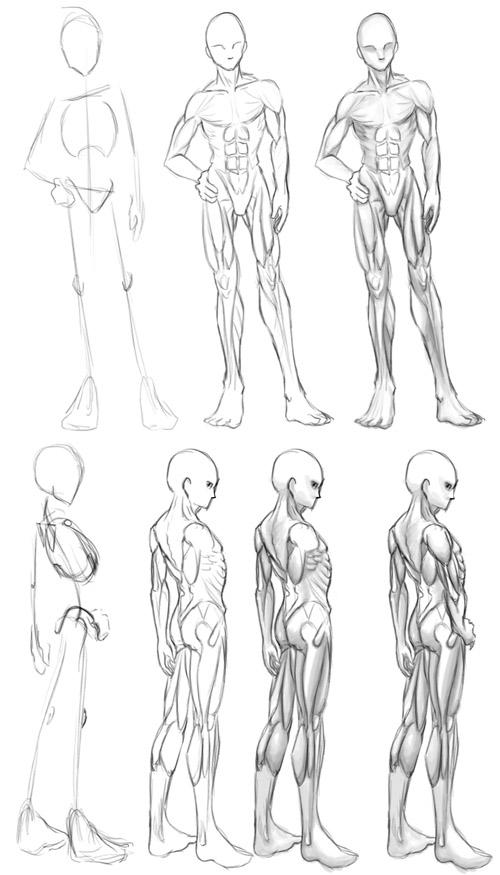 004 - Old - Muscle Anatomy By Athey On DeviantArt