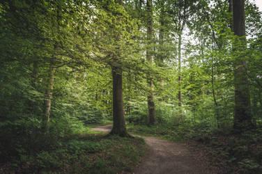 Summer in the Forest by 1darkstar1