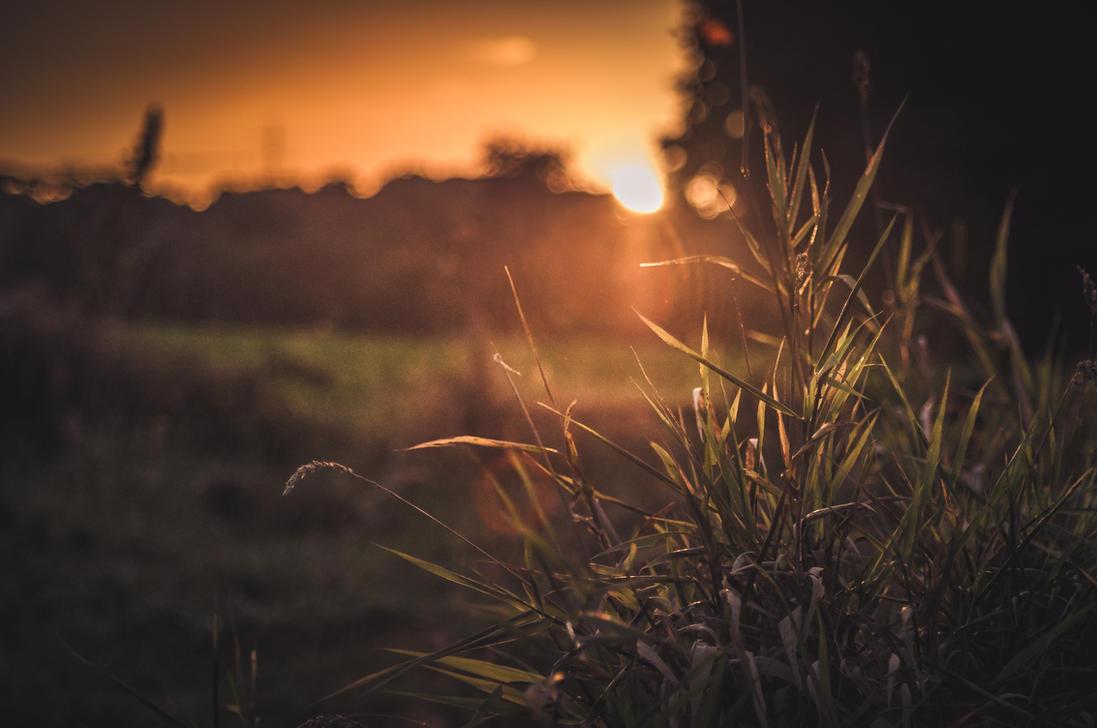 Warm Sunset by 1darkstar1