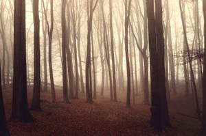 Forest Mist by 1darkstar1