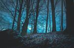 Cold Woodlands