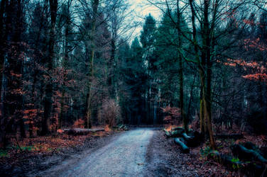 Into the Forest by 1darkstar1
