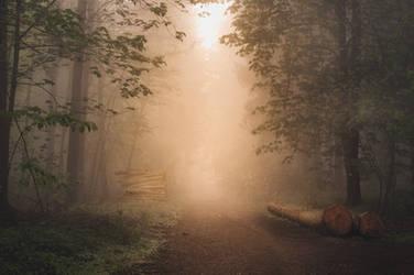 Into the Mist by 1darkstar1