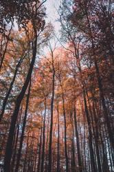 Forest Fever by 1darkstar1