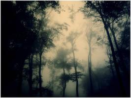 dark forest by serialkillerstock