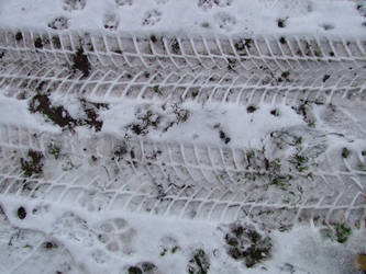clues in snow